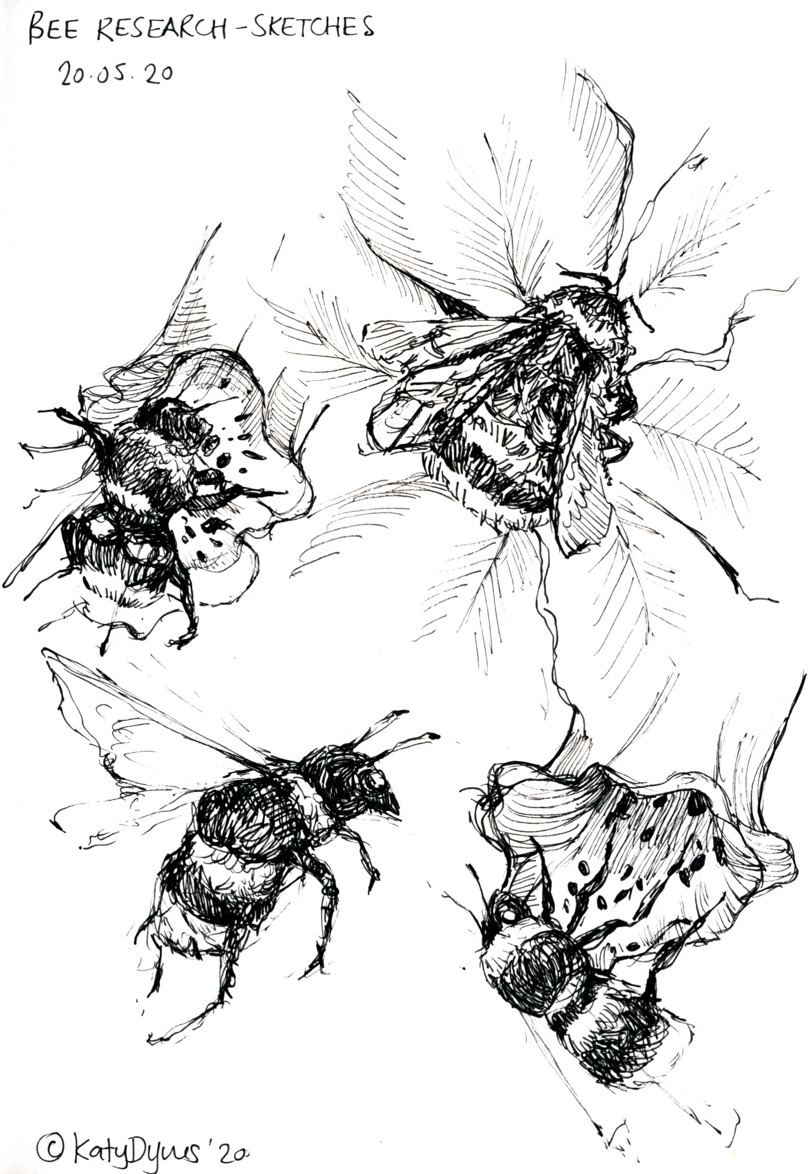 Bees- original pen sketch, 14 x 20