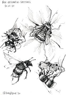 Bees- original pen sketch, 14 x 20