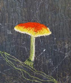 Fungi 1     Aspects of Stitch