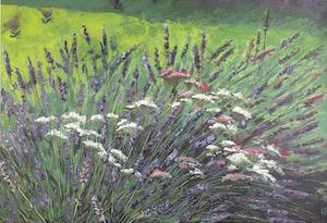 Freerange Lavender