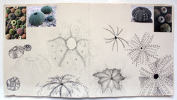 Katherine Fortnum Ceramics - Sketchbook pages (7)