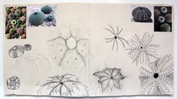 Katherine Fortnum Ceramics - Sketchbook pages (7)