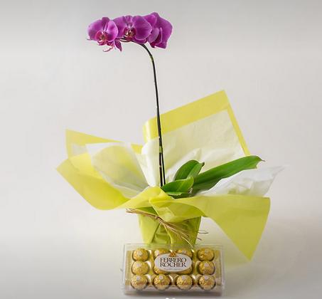 Orquidea Pink com chocolate