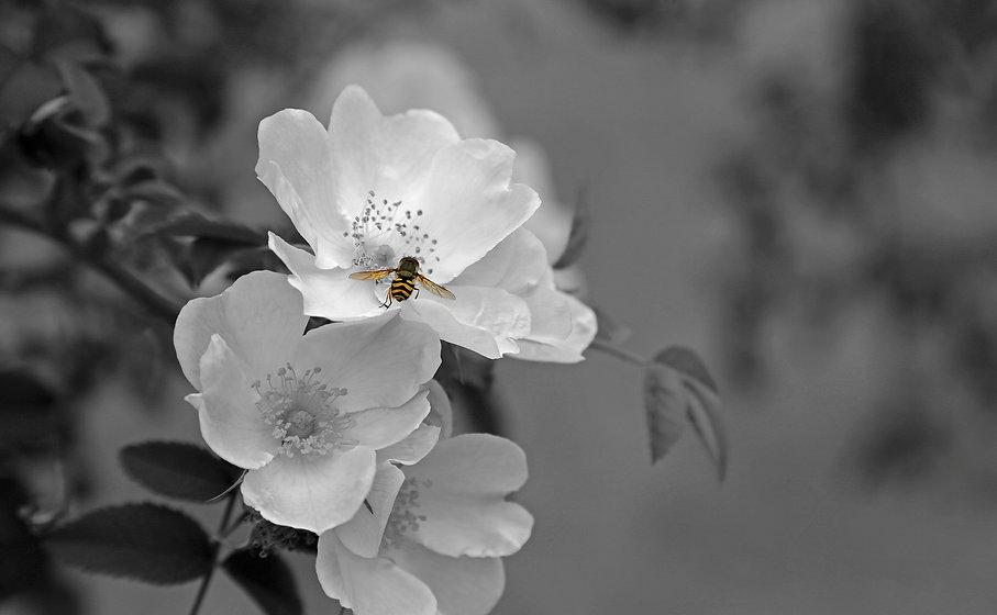 flower-659216_1920.jpg