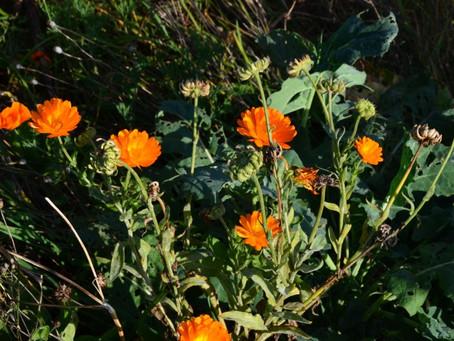 Blühnews: Oktober