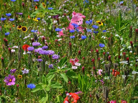 Blühpatenschaften 2020