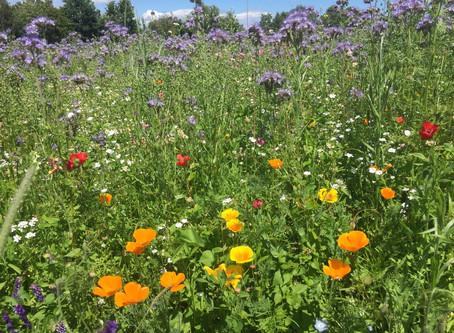 3. Blühnews - die Bienenfreunde sind da