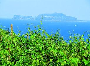 Vigneto e Capri