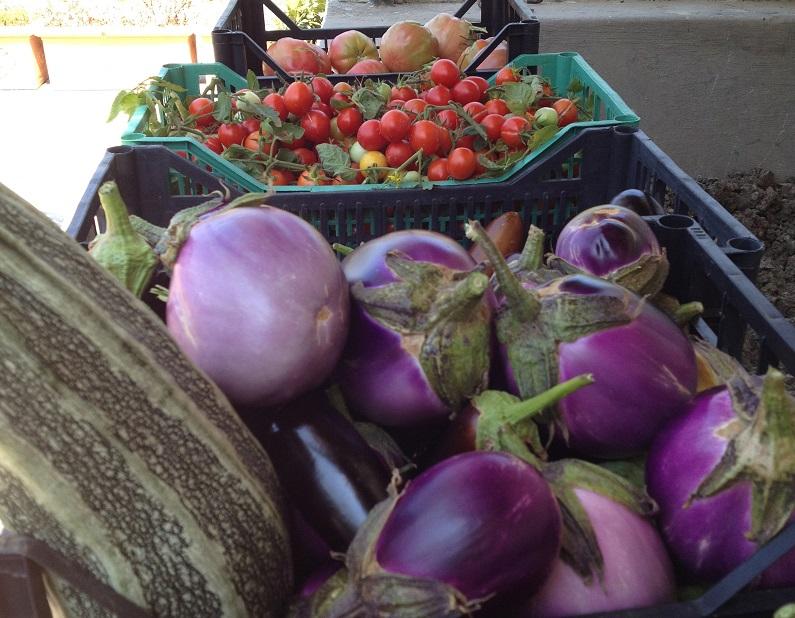 Tomaten, Auberginen und Zucchini