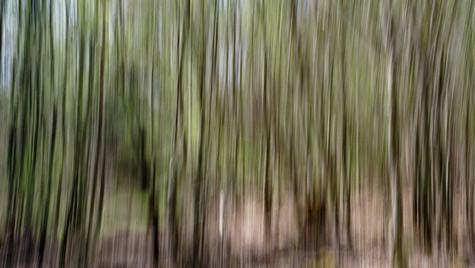 spring forest 2020