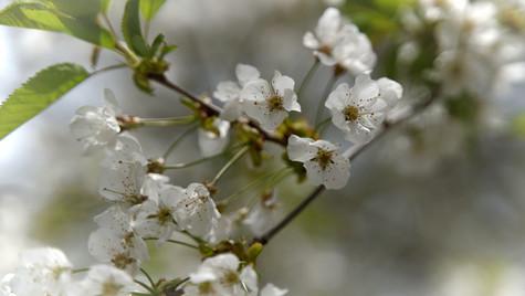 spring blossom 2020