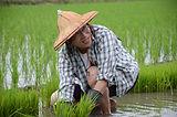 Yung_song at rice field.JPG.JPG