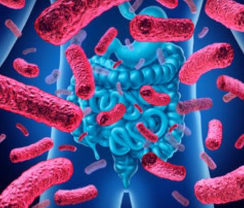 I batteri intestinali possono inibire la perdita di peso?