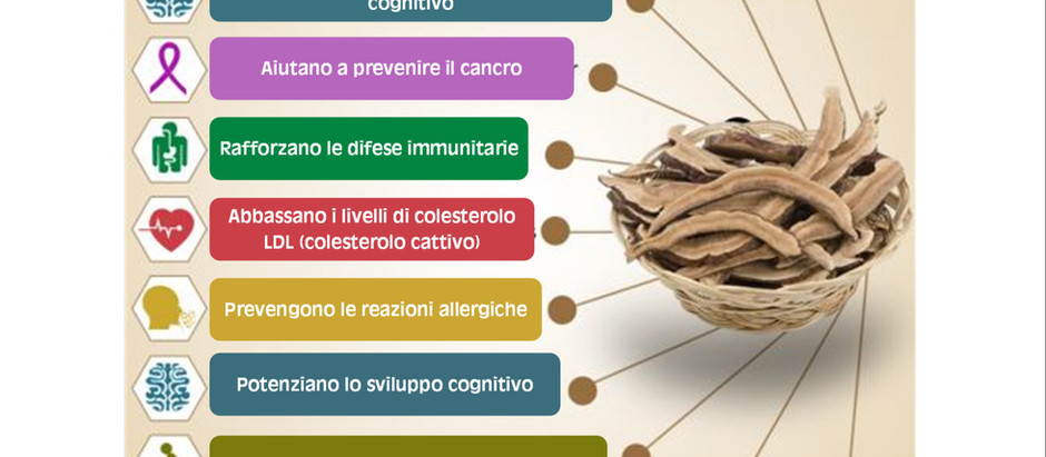 INFOGRAFICA: Benefici per la salute dei funghi Reishi