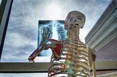 skeleton-2561573_1920.jpg