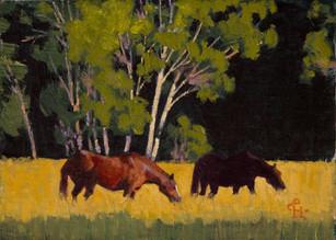 Horses Near Utah Lake