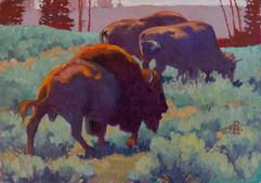 Yellowstone Park Herd