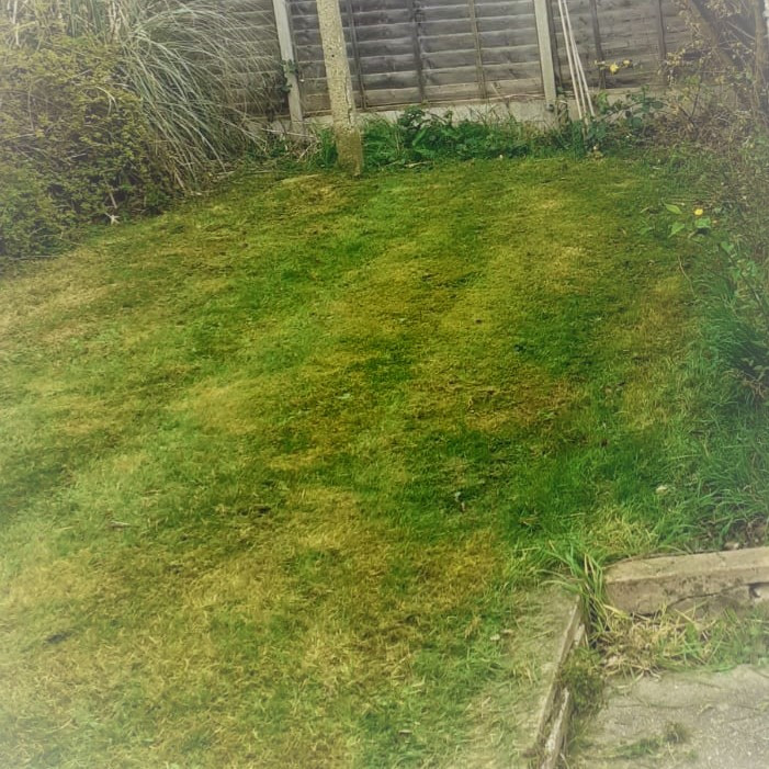 MJB44-GRASS.jpg
