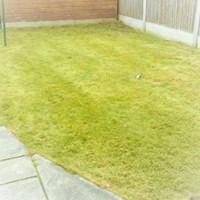 MJB007-GRASS.jpg