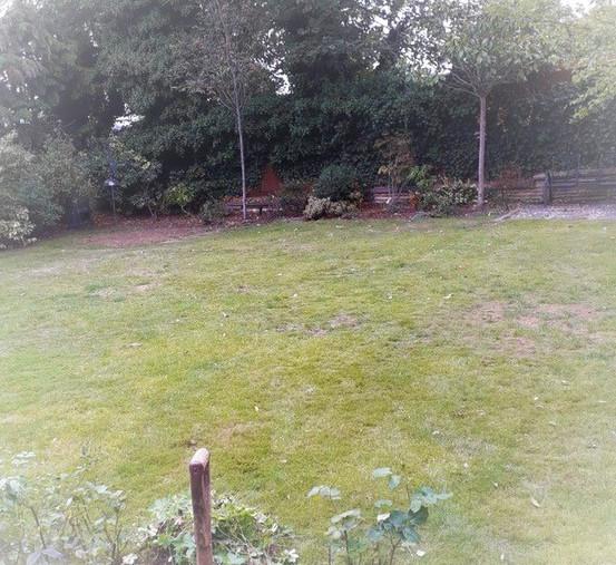 MJB28-GRASS.jpg