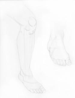 leg and feet study