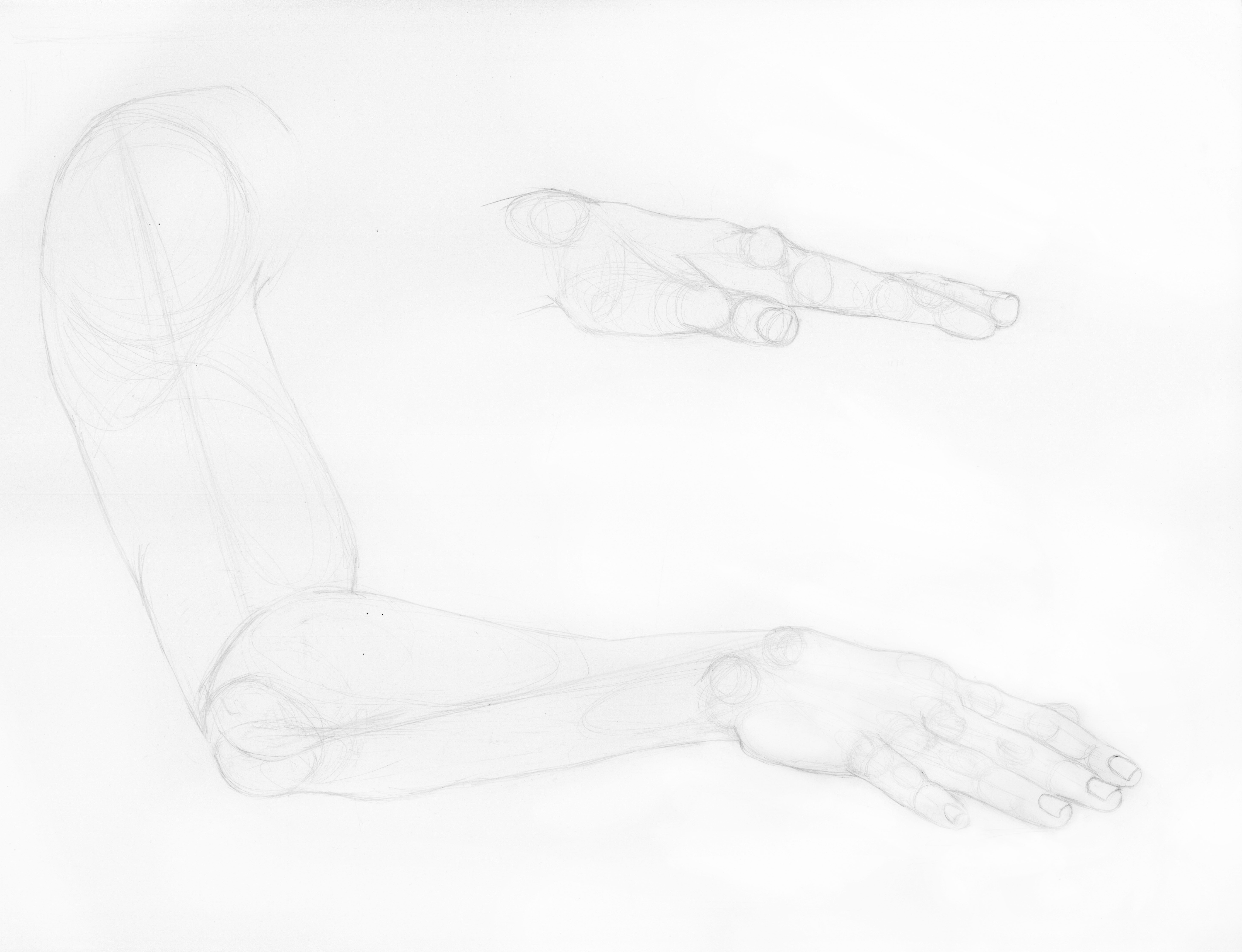 arm and hand study
