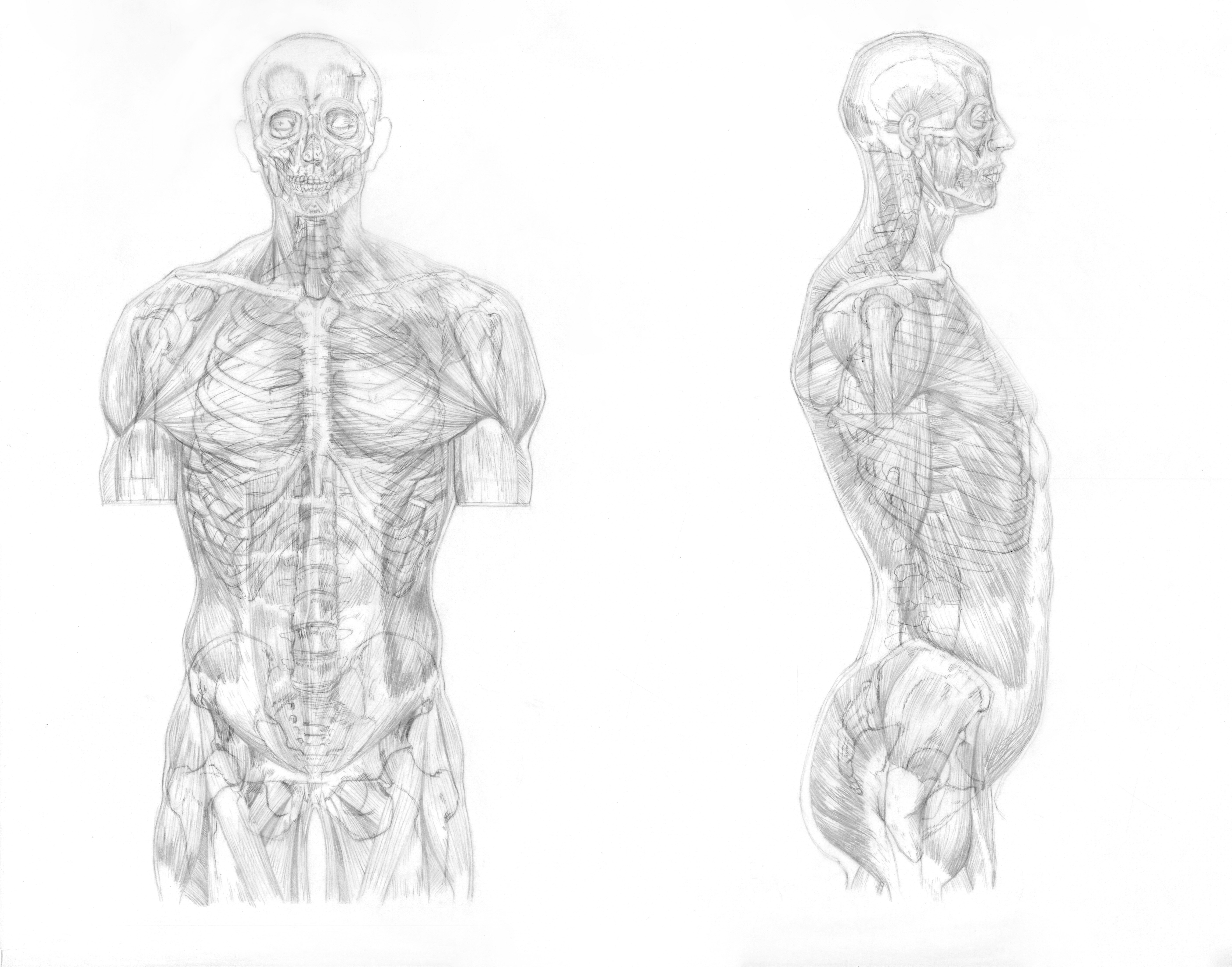 muscle and skeleton overlay