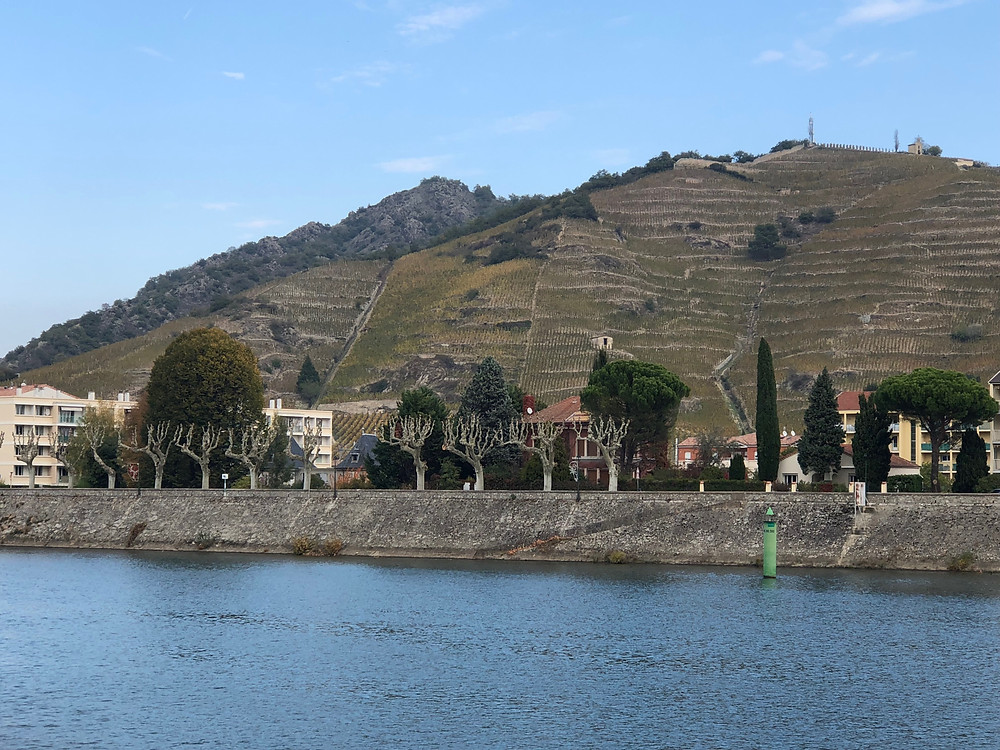 Vineyards seen cruising the Rhone, Vienne