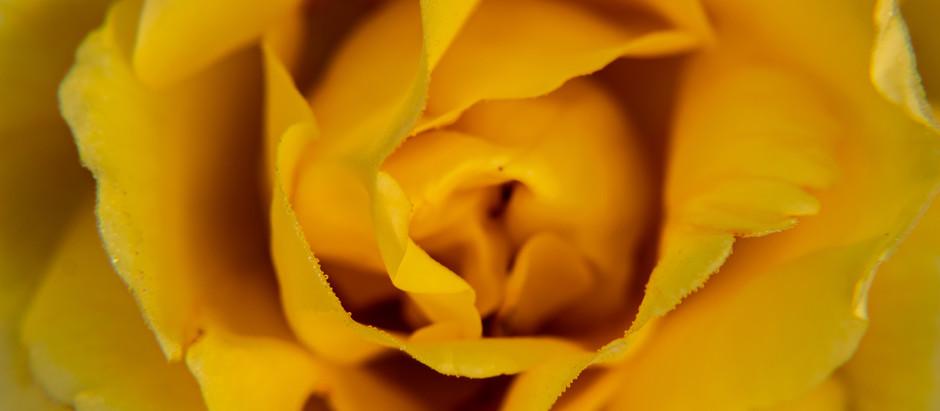 Lenten Pilgrimage | Mary + Gandhi teach us to LOVE ourselves