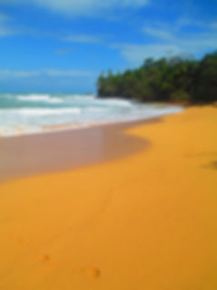 Isla Colon, Playa Bluff, Bocas del Toro, Panama