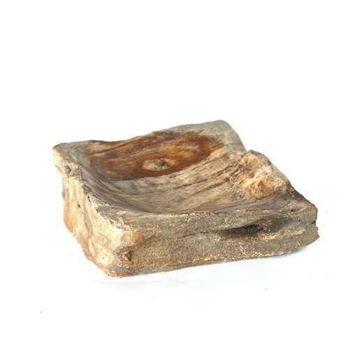 Ash Ray  Fossil Stone