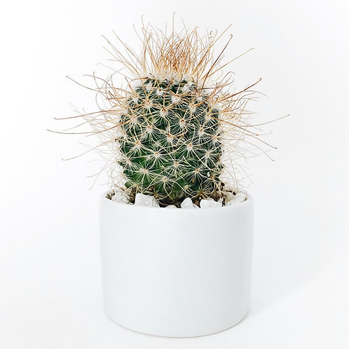 White Terazzo pot planter