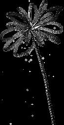 fleur noire copy.png