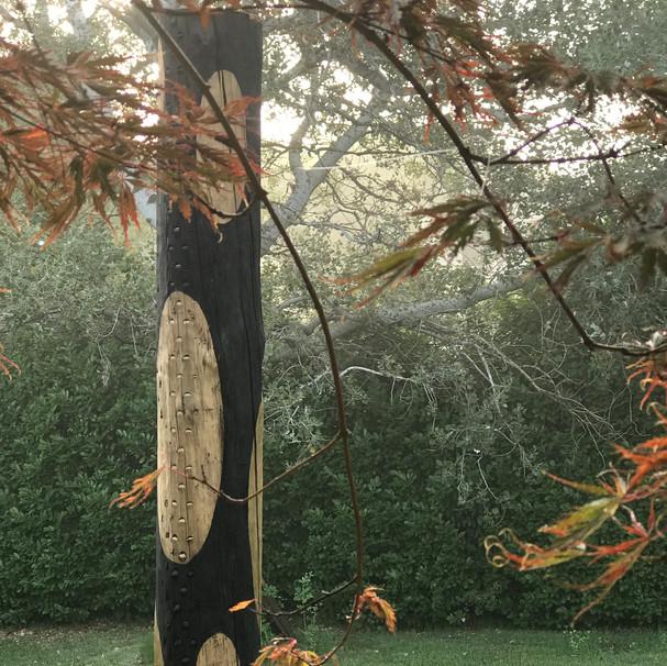 l'arbre léopard
