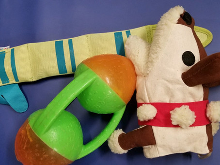 Why and How you want to clean your dog toys!