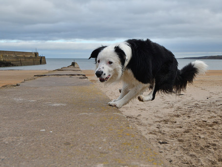 What is Dog Parkour?