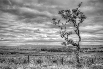 'Divis Tree' by Jonny Clark ( 9 marks )