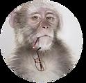 le-singe.png