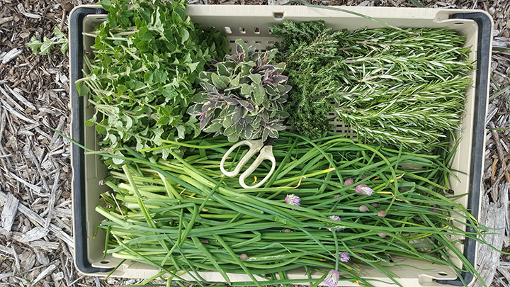 cut herbs
