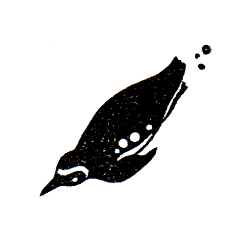 Penguin - 3