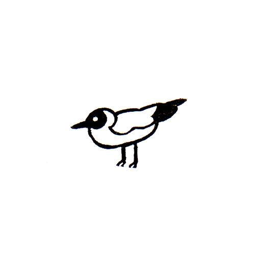 Albatross - 1