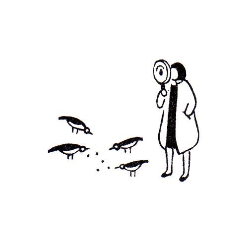 Observing Doves
