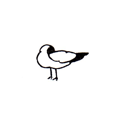 Albatross - 4