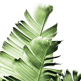 banana leaves.png
