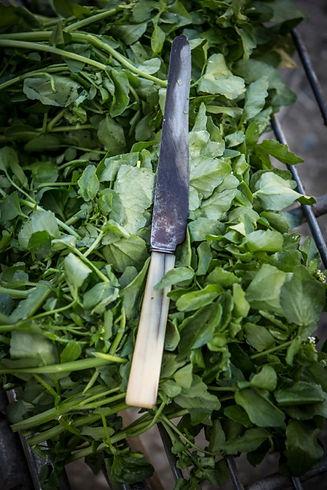 Watercress knife