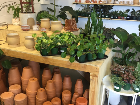PDX Picks: Our Favorite Local Plant Shops