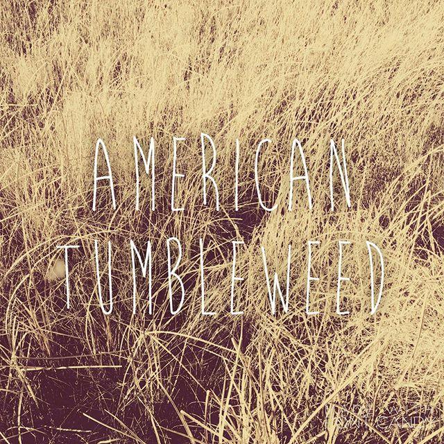 american_tumbleweed_sigrid_boyer_field