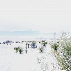 american tumbleweed_white sands new mexico shoot
