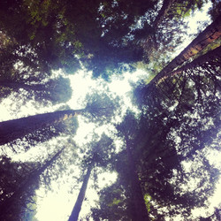 quickandtumble_portland_forest_sigrid_boyer