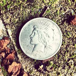 silver dollar_sigrid_boyer